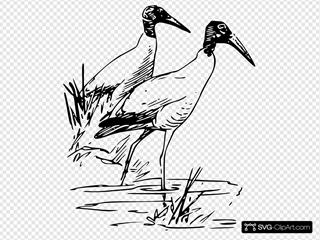 Nayrhcrel Wood Ibis