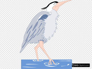 Heron Walking In Water