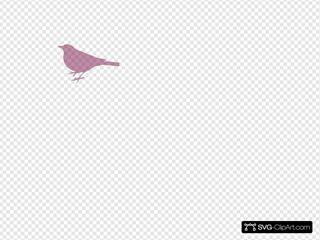Pink Bird Profile