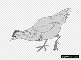Grayscale Chicken Eating