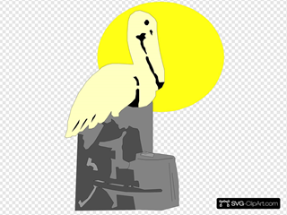 Pelican On Rock