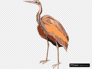 Brown Heron Standing