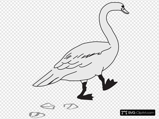 Goose Walking With Footprints