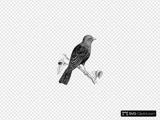 Cowbird