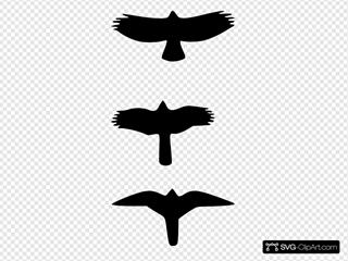 Sbuteo Accipter And Falcon