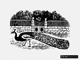 Peacock At The Gate