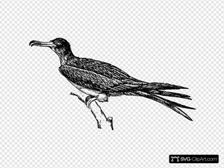 Frigate Drawing