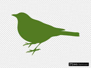 Green Bird Profile