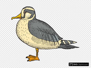 Stiff Feathered Duck