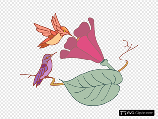 Hummingbirds And A Flower