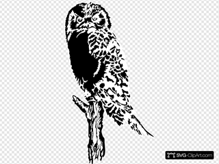 Owl Perched On Dead Tree