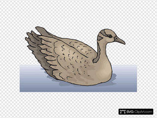 Brown Goose Swimming