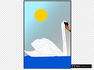 Swan Swimming In The Sun