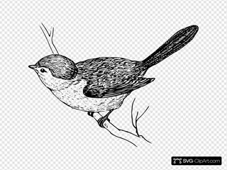 Bushtit Drawing
