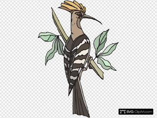Hoopoe Perched On Tree Branch
