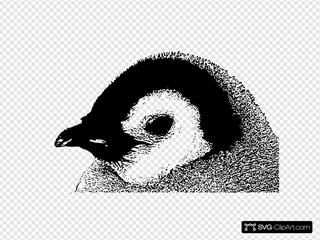 Emperor Penguin Chick Head