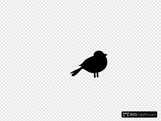 Baby Black Bird