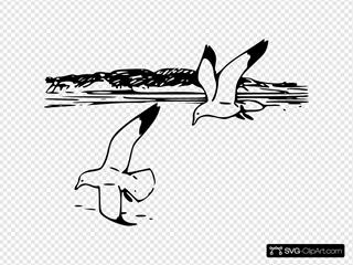 Flying Sea Gulls