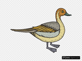 Feathered Duck