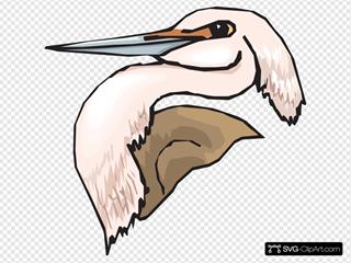 Pink Heron Head