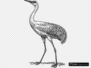 Drawing Of A Crane