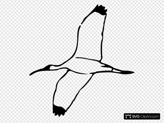 Flying Wood Ibis