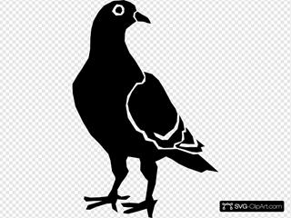 Pigeon Silhouette