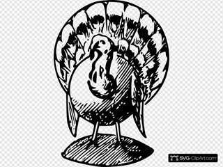 Turkey Standing With Shadow