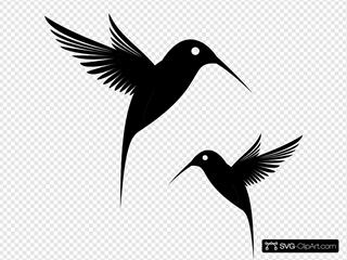 Black Humming Bird