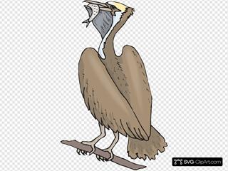 Pelican Eating A Fish