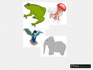Frog Jelly Fish Bird Elephant