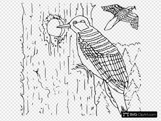 Coloring Book Woodpecker