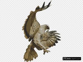Hawk Attacking