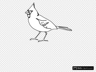 Cardinal Outline