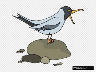 Screeching Gull