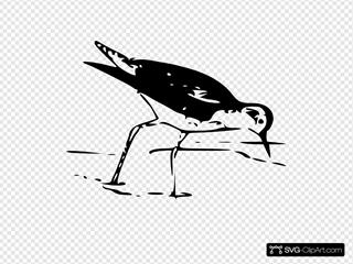 Yellow Leg Bird