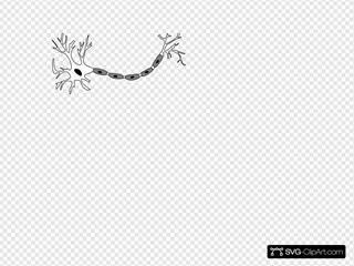 Neuron B&w