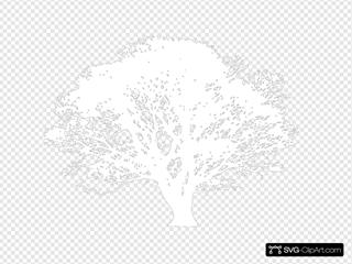 White Tree Silhouette On Black