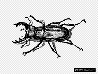 Staghorn Beetle SVG icons