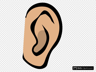 Ear - Body Part