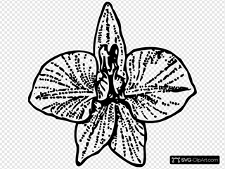 Black Orchid Outline