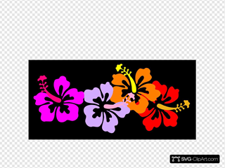 Coral Hibiscus2