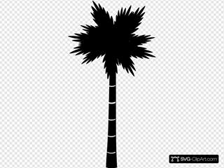 Palm Black Transparency