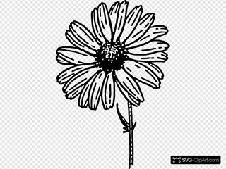 Daisy Black And White
