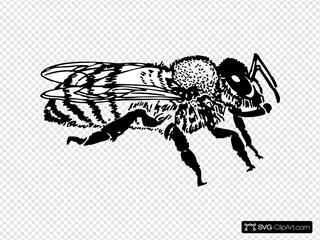 Honeybee Side View