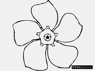 Periwinkle Flower Top View