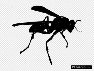 Wasp Bw