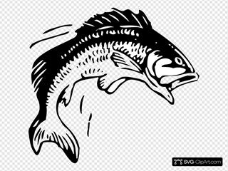 Todd Fish