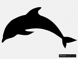 Dolphinblack
