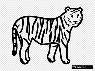 Tiger Standing Looking And Watching Outline